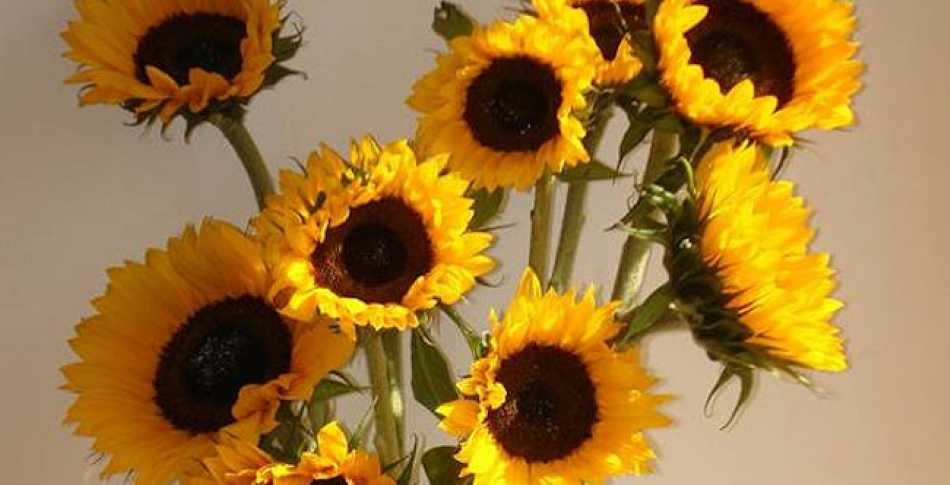 I was very pleased to receive some beautiful sunflowers after my Referral Masterclass last week!